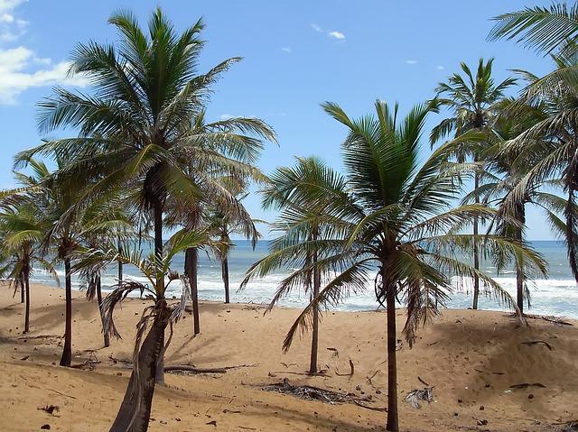 kokosová plantáž